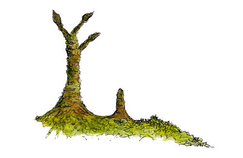 Prototaxites Lichens